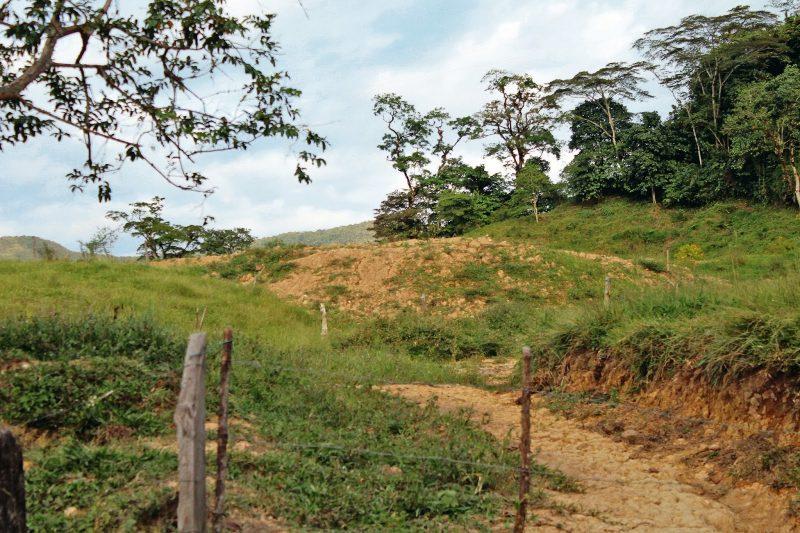 Con el documento Conpes 3468 de 2007, se establece el mejoramiento de sanidad aviar e inocuidad de los productos del sector en Colombia, con el fin de proteger la salud y vida, de los animales y las personas. /FOTO ANDREA NOCOVE