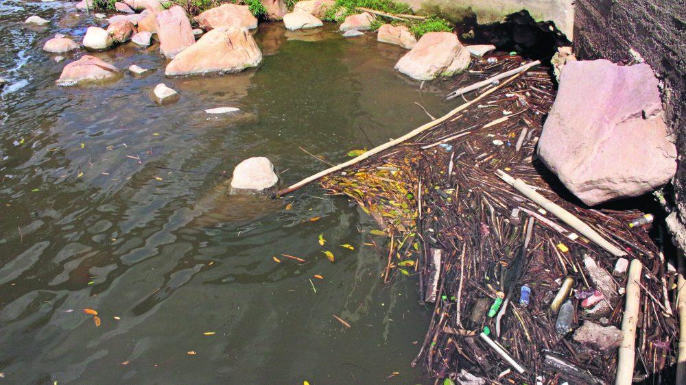 Este es el estado del río de Oro en el sector del Zancudo. Algunos habitantes del sec- tor se quejan por la basura que es arrojada al mismo / FOTO MAIRA ALEJANDRA OROZCO DÍAZ