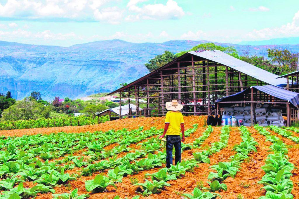 Según el presidente ejecutivo de la Cámara de Comercio de Bucaramanga, Juan Camilo Beltrán Domínguez, uno de los sectores más favorecidos con la implementación de los Acuerdos sería el campo, uno de los más afectados por el conflicto armado. / FOTO XIOMARA MONTAÑEZ