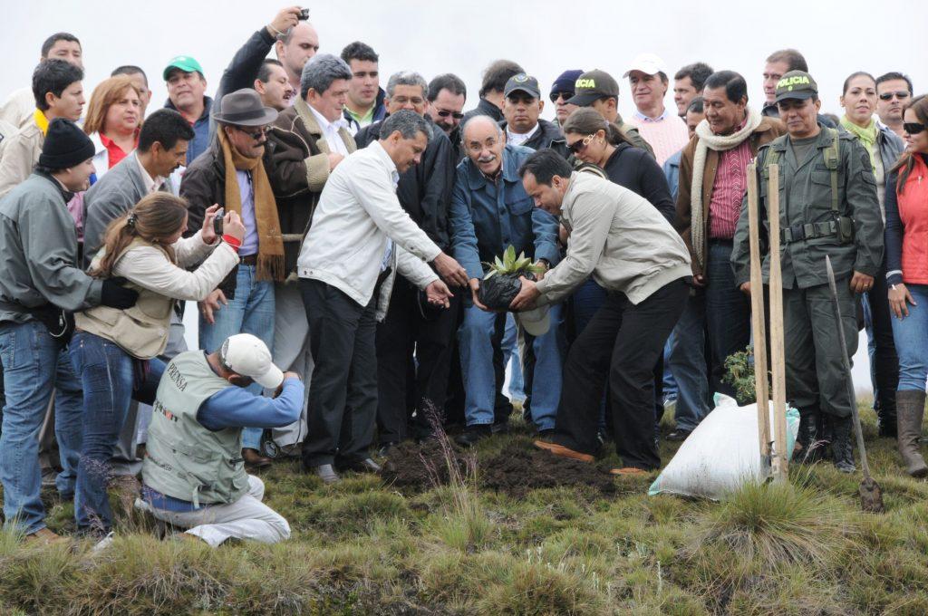 Frailejones y pinos romerones, fueron las especies sembradas en el Páramo de Santurbán, por los gobernadores de Santander y Norte, Horacio Serpa y William Villamizar, respectivamente. /FOTO PASTOR VIRVIESCAS GÓMEZ